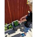 Georges planting.jpeg