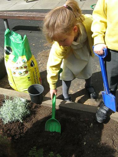 digging the soil in preparatoin for the lavender