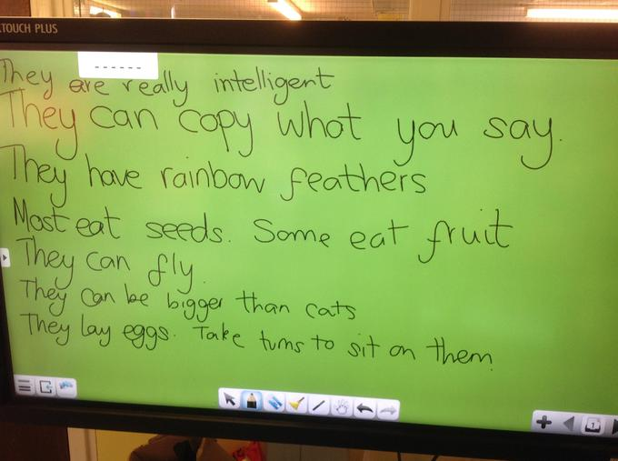 Some of our Parrot facts
