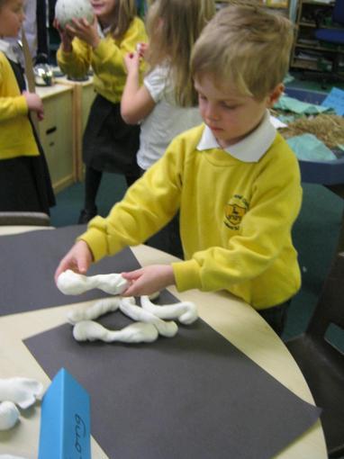 We ordered the dinosaur bones by length