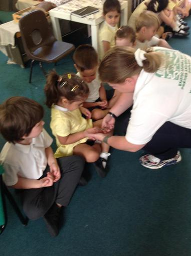 Jungle Jo brought stick insects with her