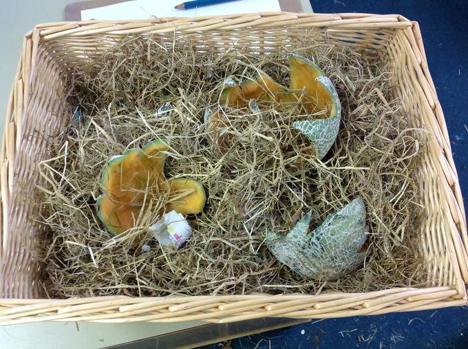 Our dinosaur egg hatched this week