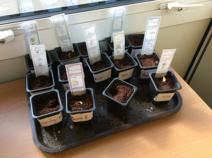 Our plants are growing!