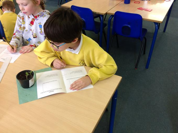Completing our sunflower diaries
