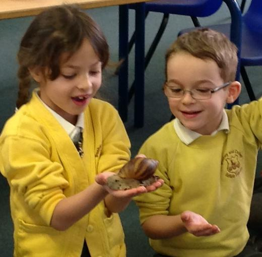 African land snails!