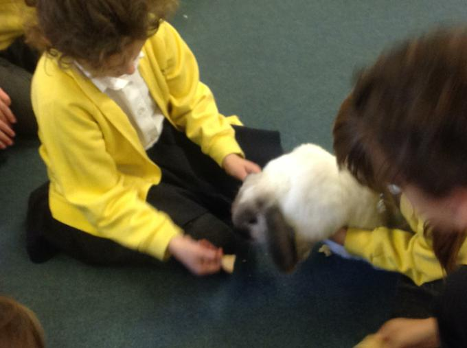 Finding out how to look after a pet
