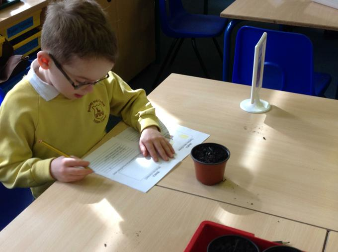 Updating our sunflower diaries