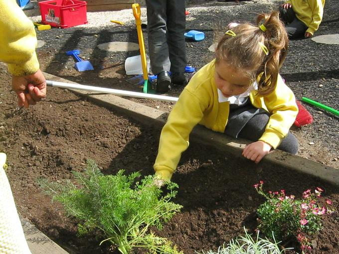 planting fennel