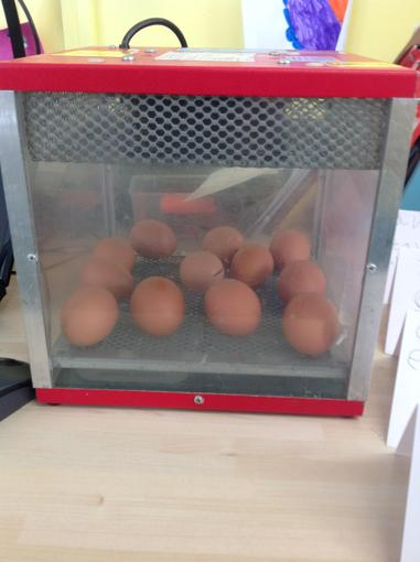 The eggs arrived