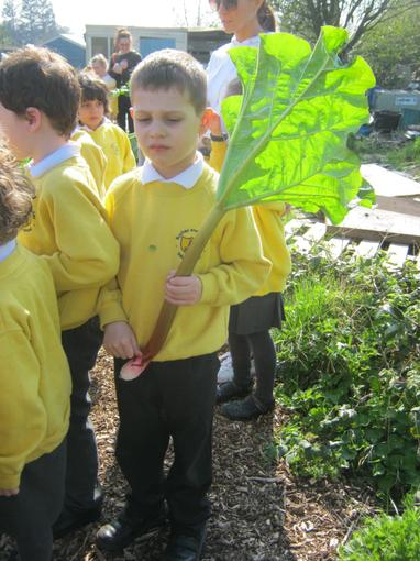 Visiting the allotment