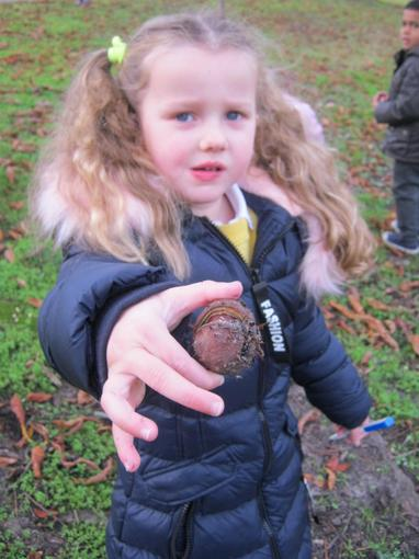 We looked for natural objects around the park
