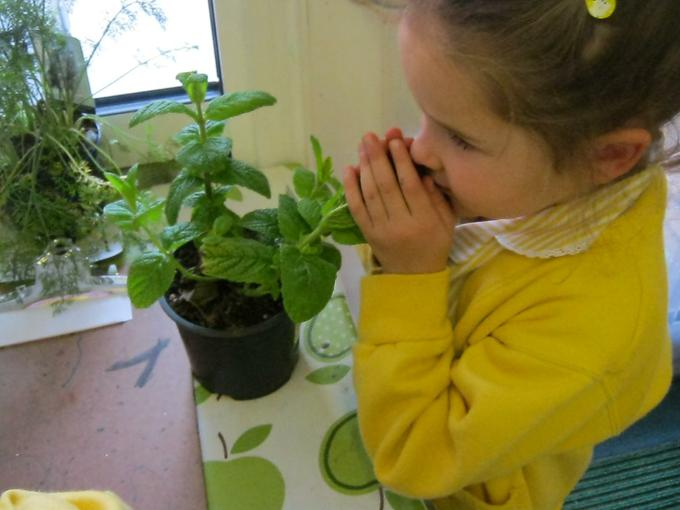 smelling the mint