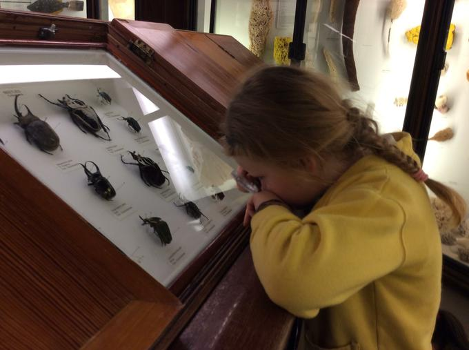 Observing specimens with a magnifying glass
