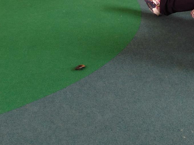 We saw a cockroach