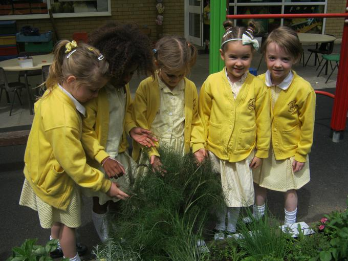 we're looking after our 'Crazy Hair Fennel'!