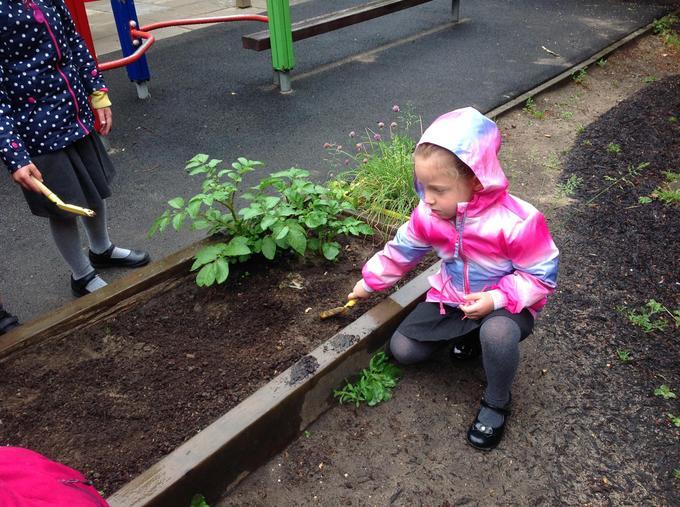 Digging up the weeds