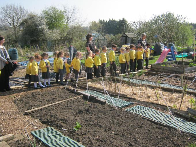 Our visit to the allotment