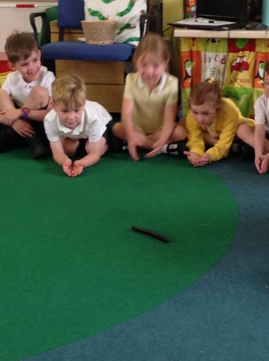 Jungle Jo brought in a millipede