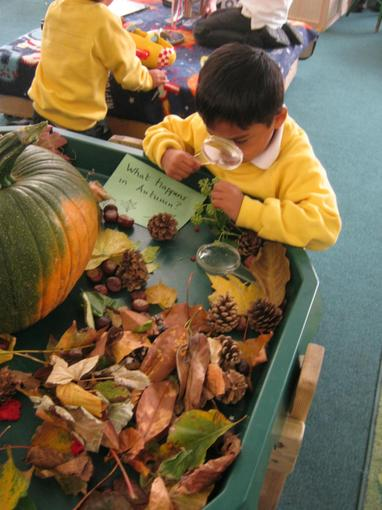 We investigated the objects on our autumn display