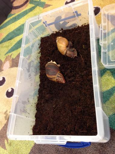 The snails having a rest!