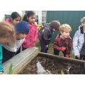 Exploring the Wildlife Garden