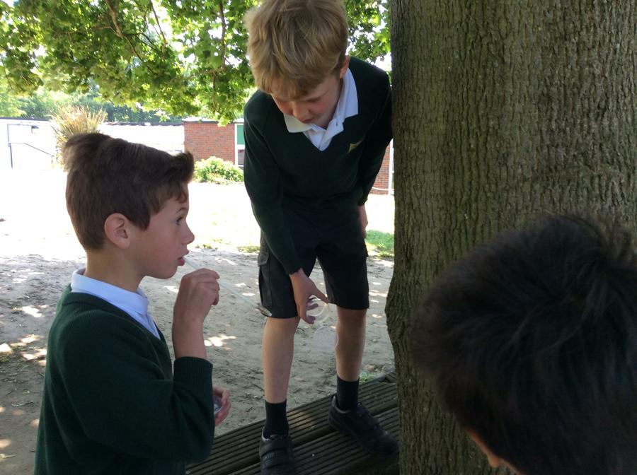 Using a pooter to catch invertebrates
