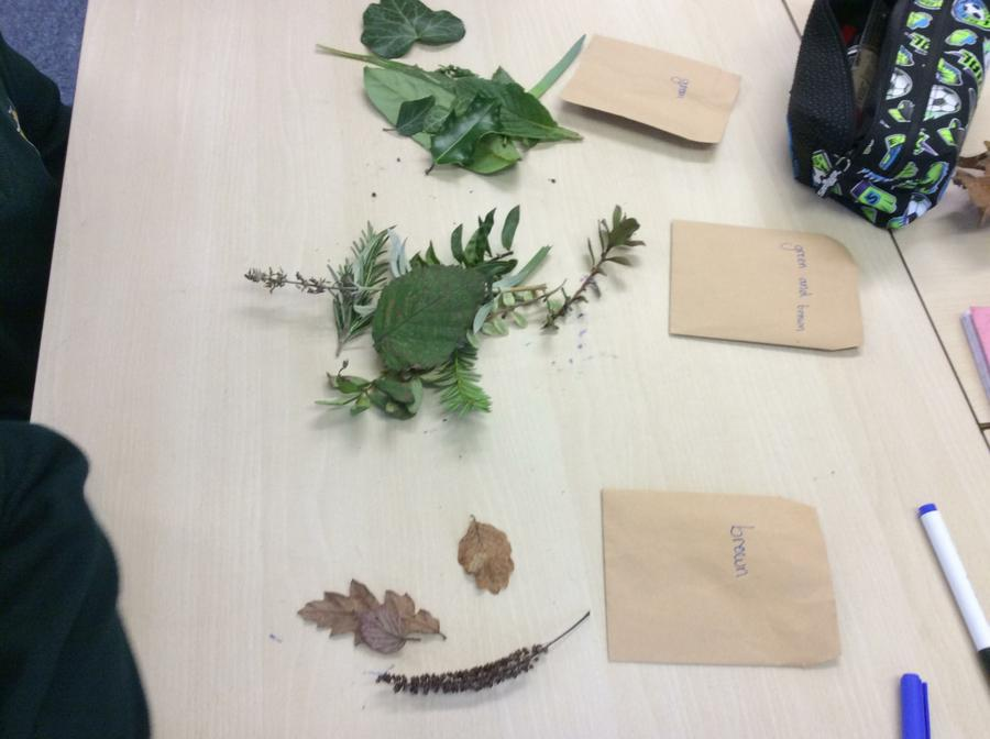 How many different ways can we classify leaves?