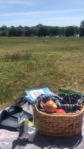 A lunchtime picnic