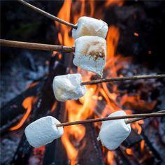 Toast marshmallows around a fire - ADULT SUPPORT