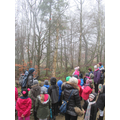 Looking at different types of trees in the wood