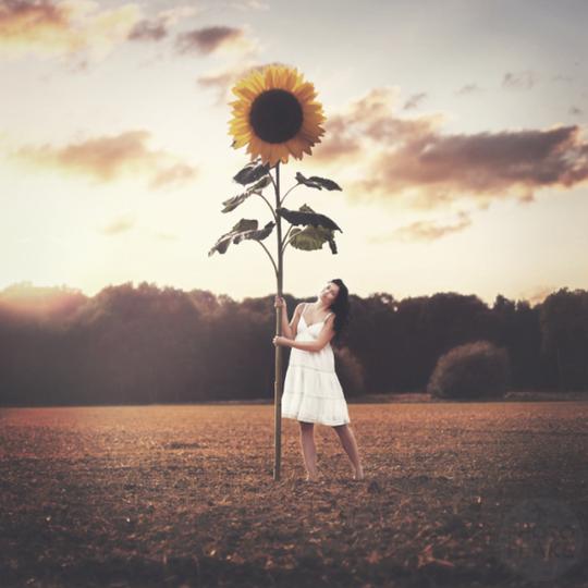 The Magic Sunflower