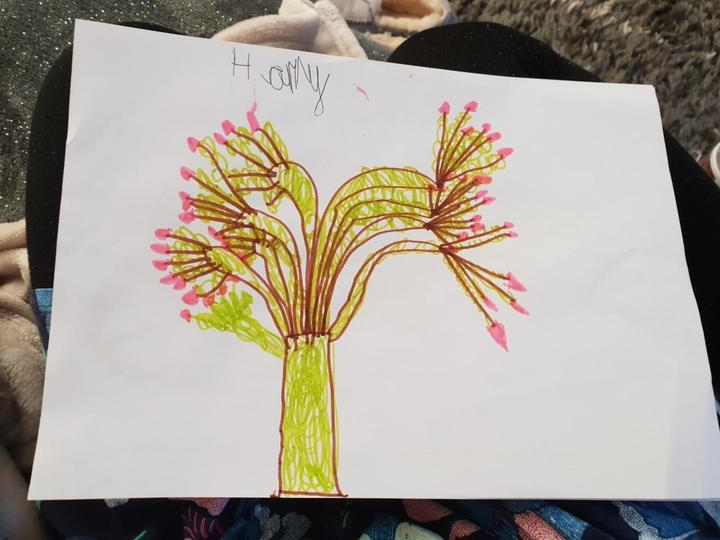 Look at the resemblance between the photograph of Harry's tree and his drawing of the tree