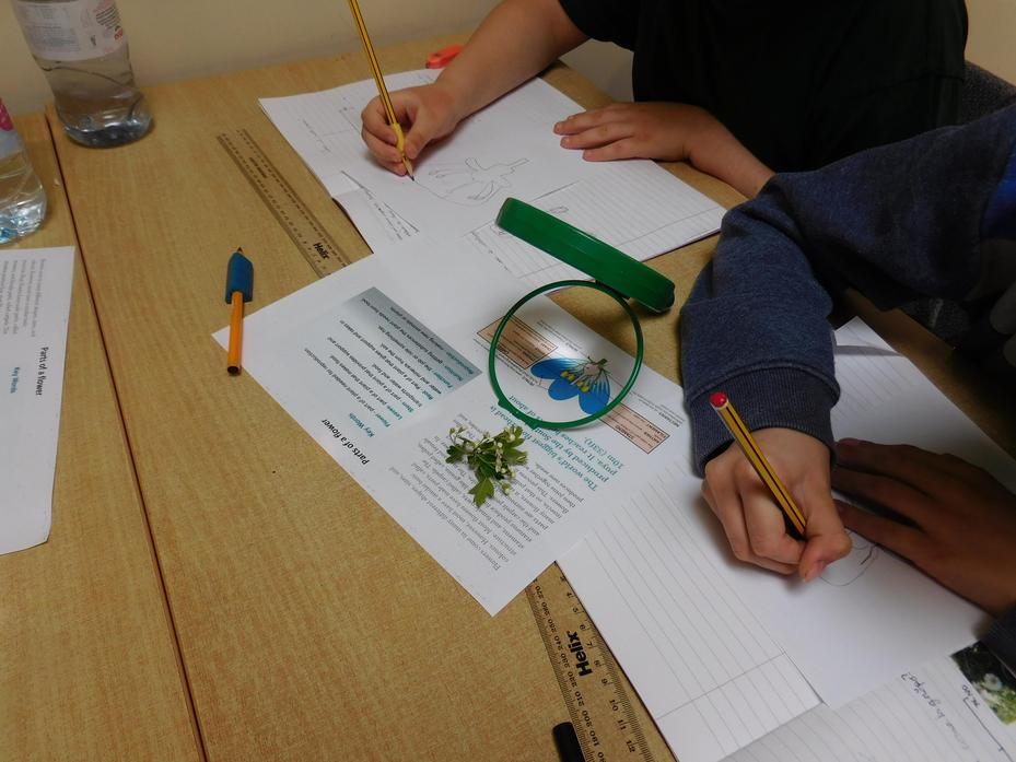 Using a magnifying glass