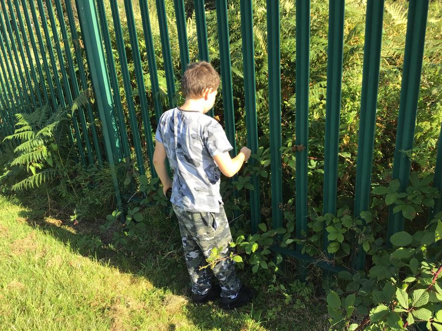 We think.... about keeping safe in the brambles