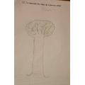 Beautiful drawing Kiran