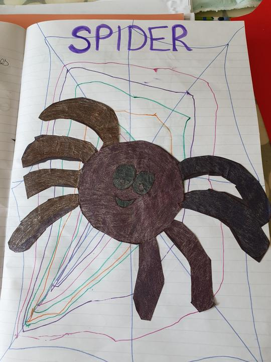 Hailie's spider in a web
