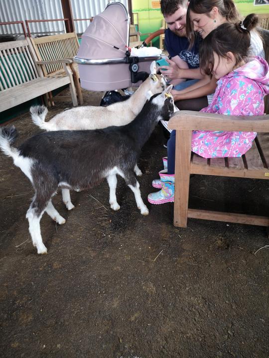 Feeding the goats
