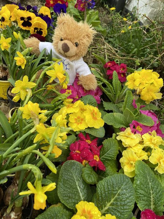 Hiding amongst the flowers