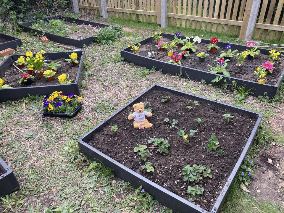 Can you figure out what plants Pip has planted?