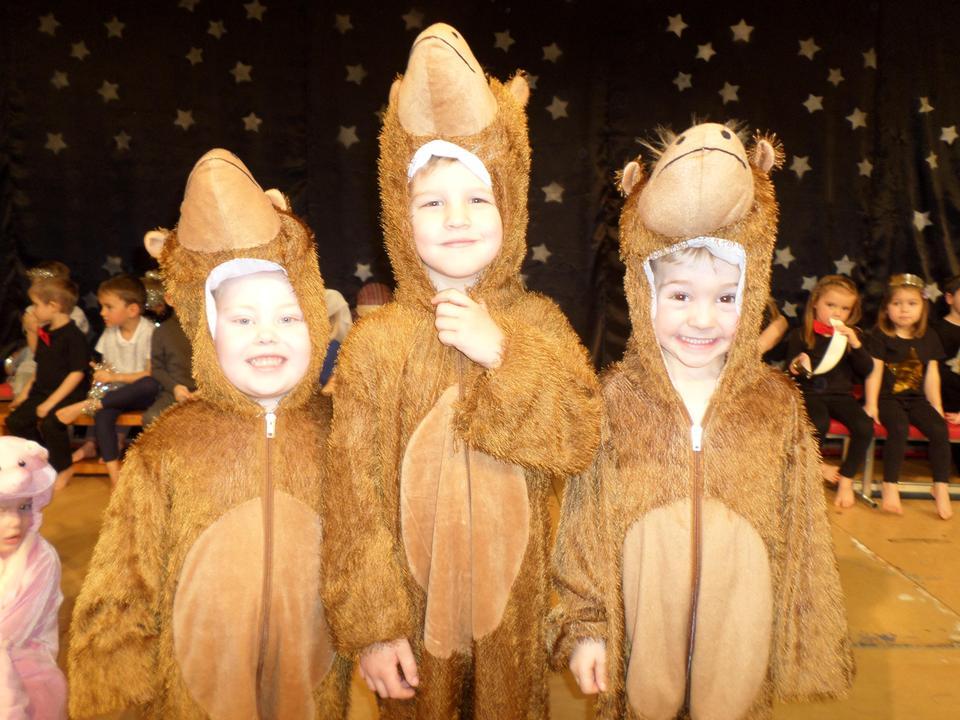 3 Camels!
