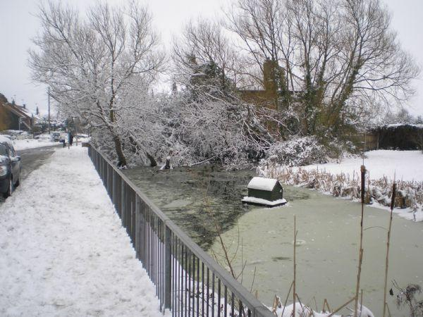 Village Pond - 5th Feb 2012