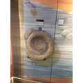 An ammonite fossil