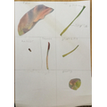 Olivia's flower dissection