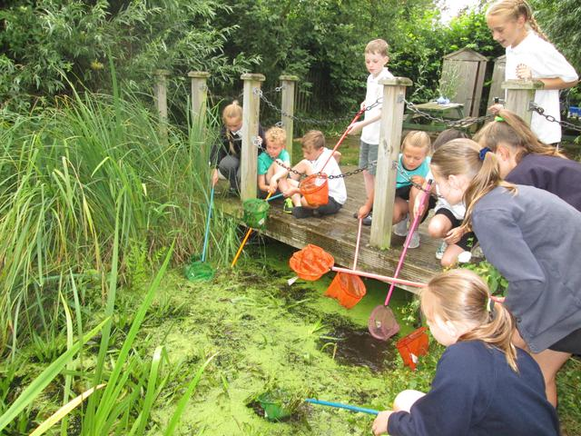 Yr 5 - Pond dipping and sketching