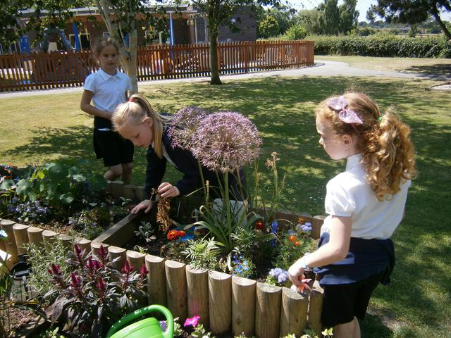 Looking after our garden plots