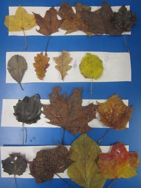 Ordering leaves