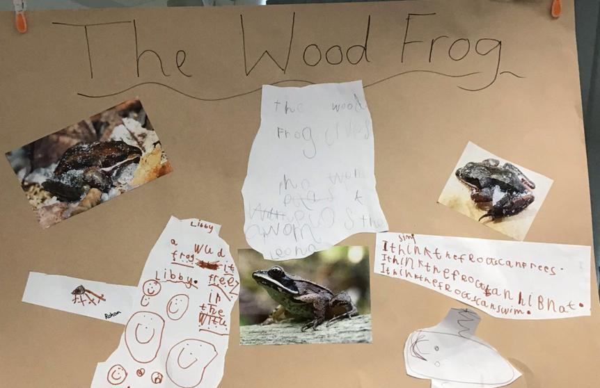 Creating a poster about the wood frog