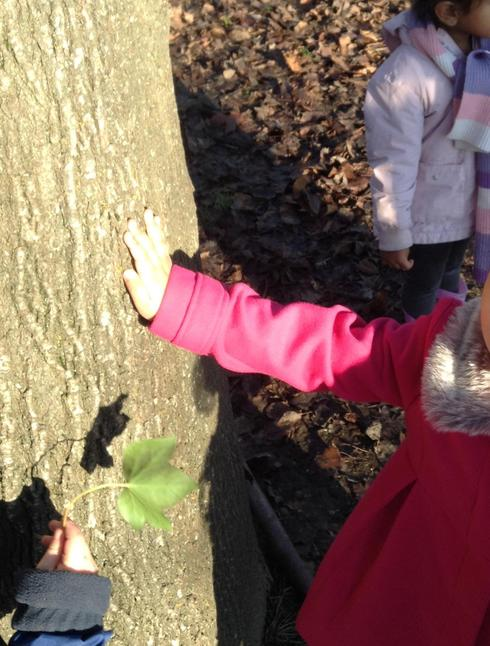 Exploring the effect of the sun on the trees