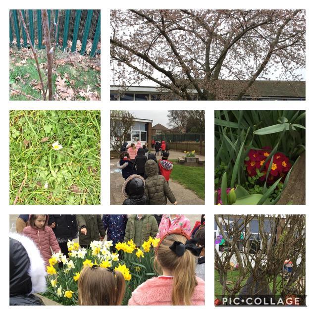 Spring walk around our school