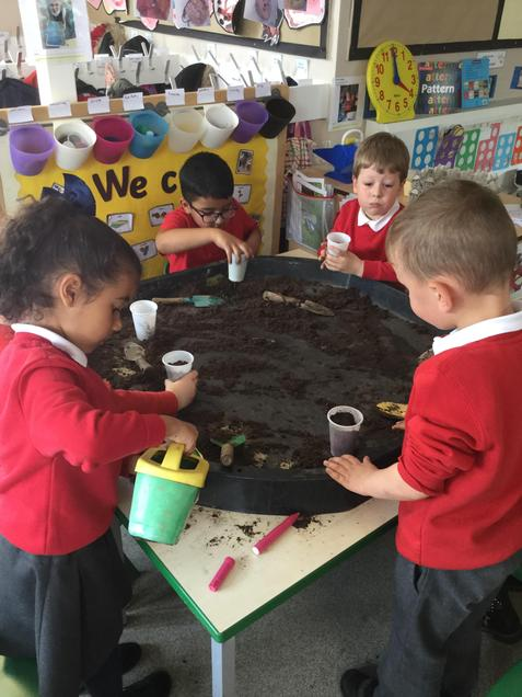 Planting our magic beans